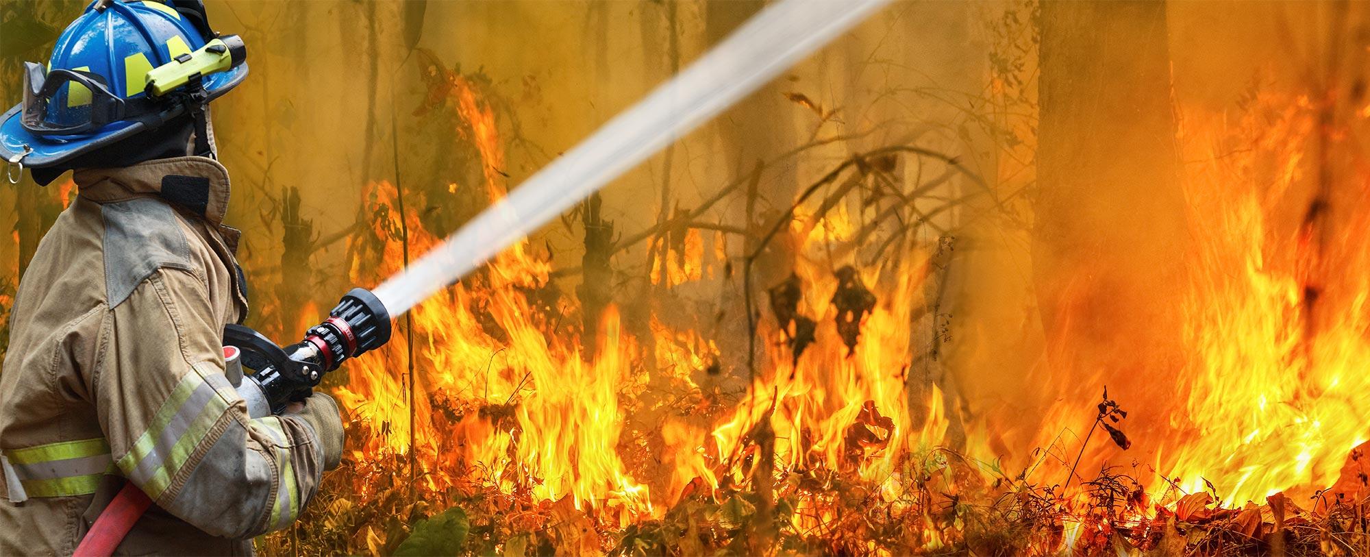 Bushfires timber